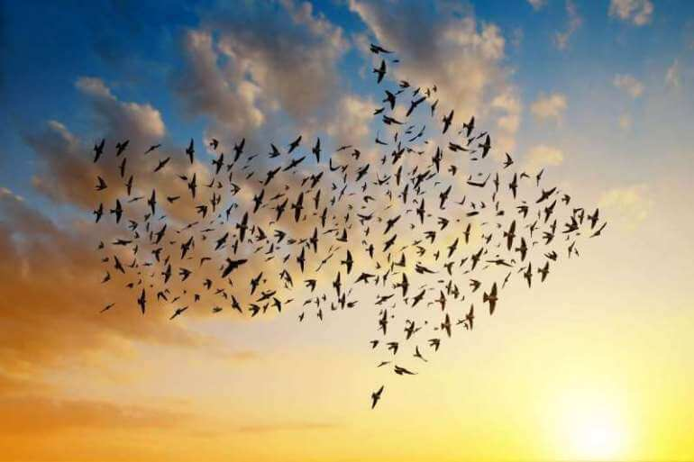 Birds flying in an arrow formation into the sunset
